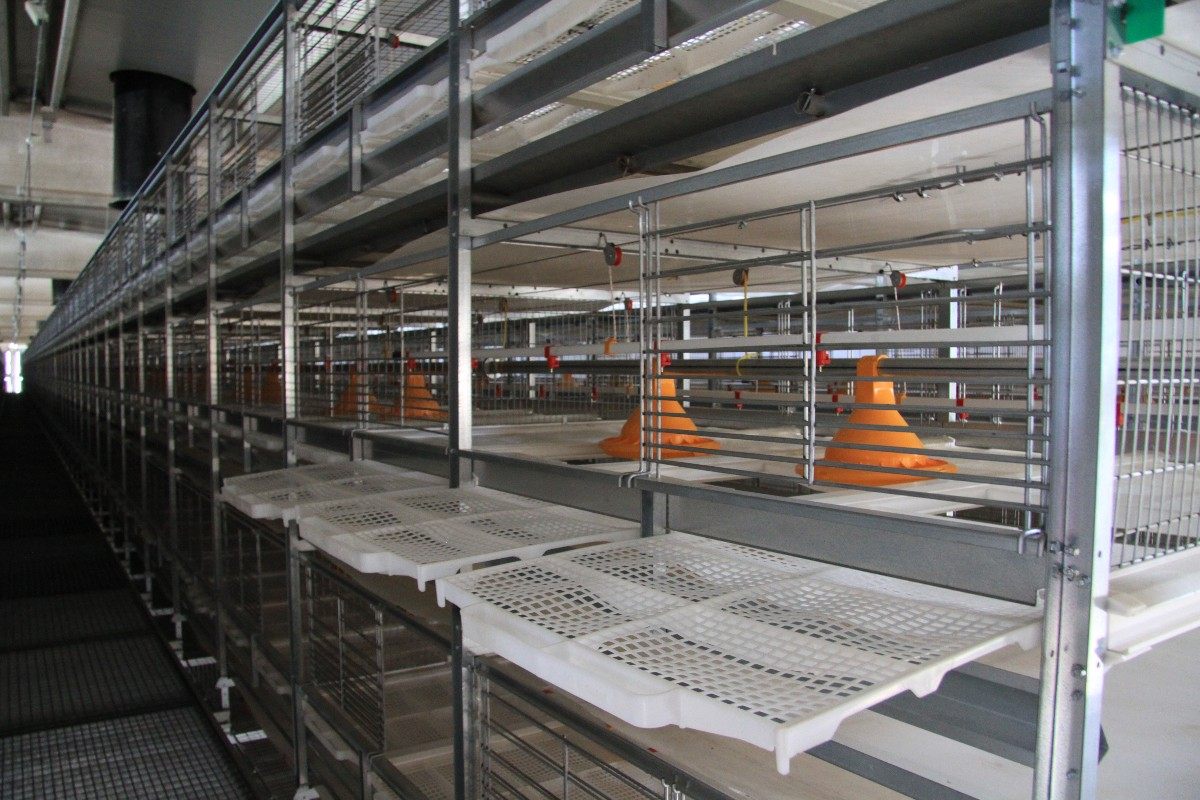 broiler cage 1