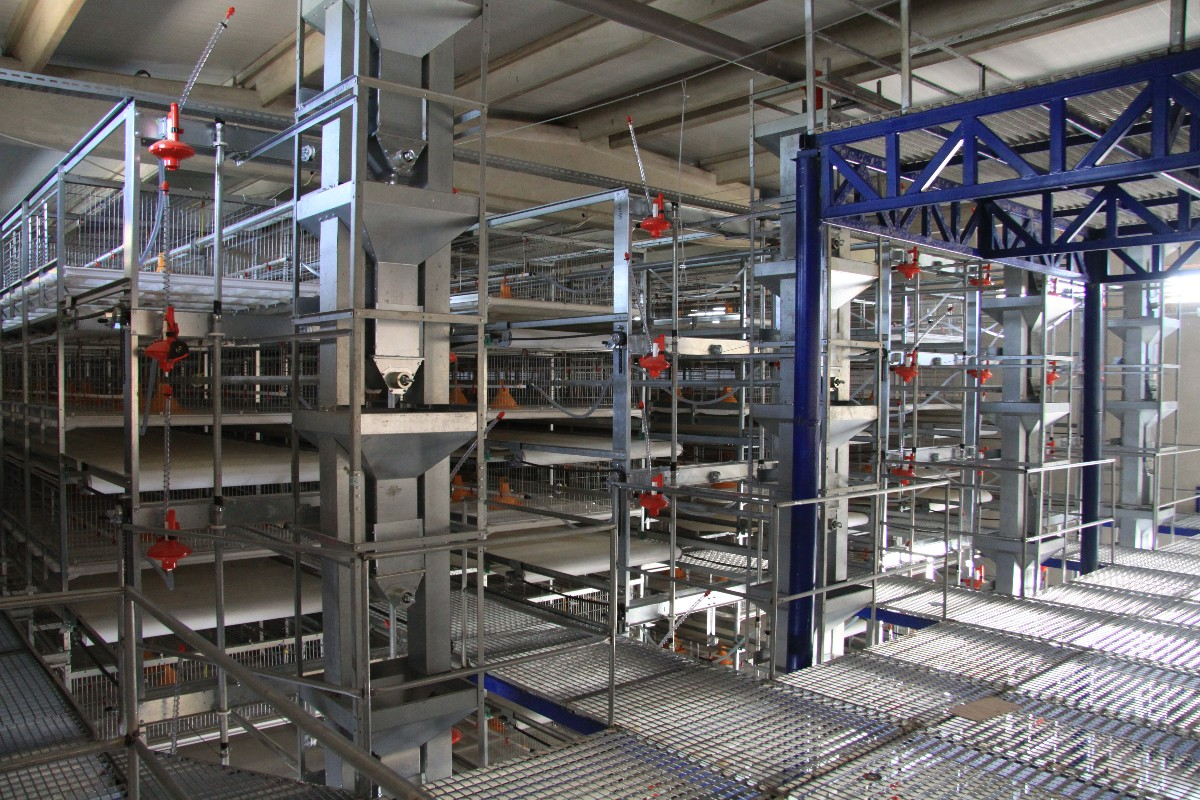 broiler cage 3