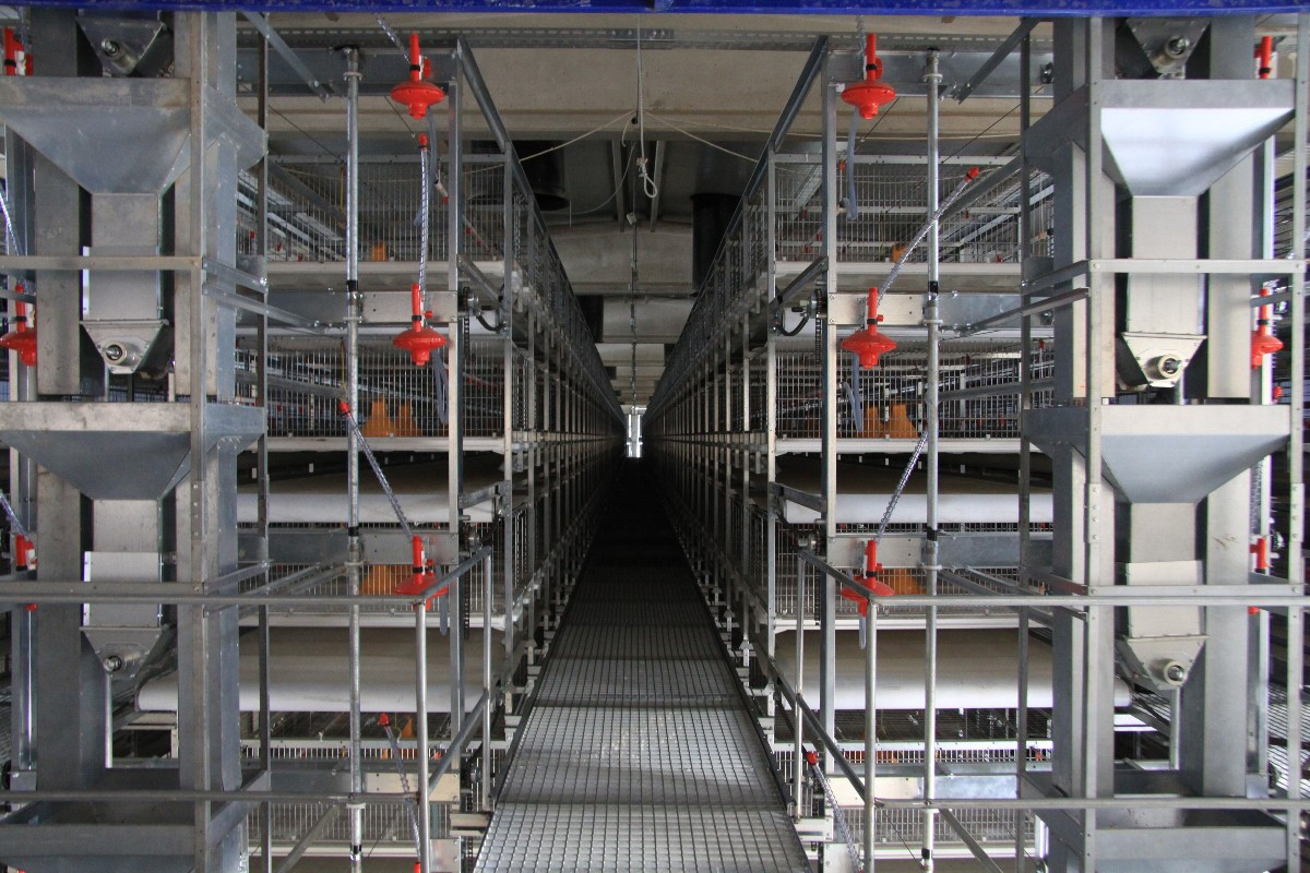 broiler cage 6