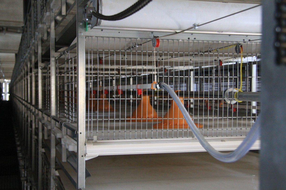 broiler cage 5