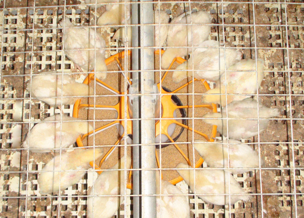 6broiler cage